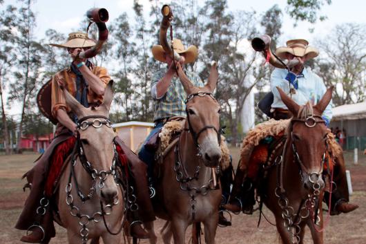 Shows de música sertaneja raiz, desfile de muladeiros, provas e leilão marcam a programação do 2º Barretos Muar do Sertão 41