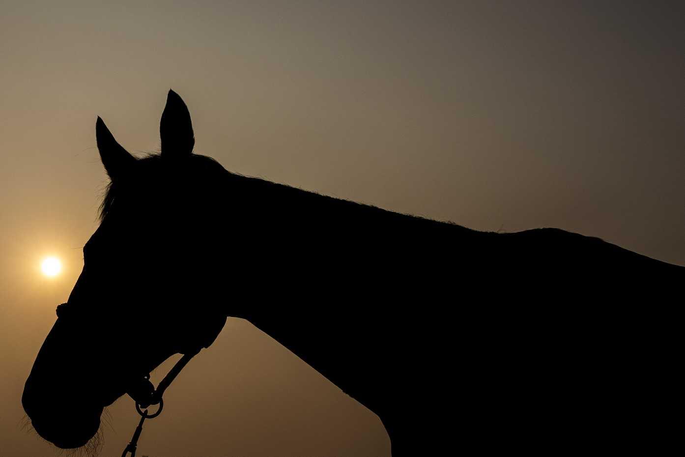 Contagem regressiva para os Jogos Equestres Mundiais 2018: a festa maior do hipismo mundial 41