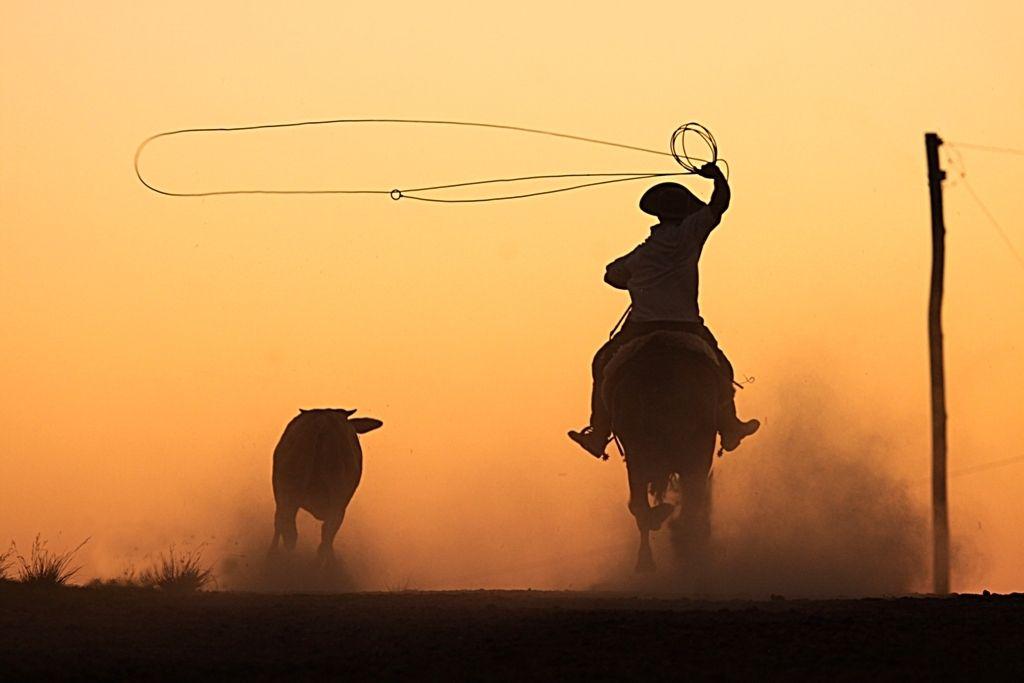 28 de setembro  - Dia do Vaqueiro: um profissional que faz a diferença no campo 42